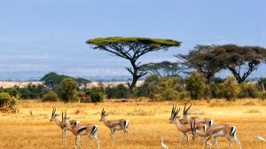 Explore African Savannah Grasslands